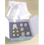 豚鼠白介素1α检测试剂盒