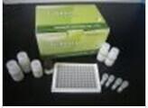 豚鼠白介素15检测试剂盒