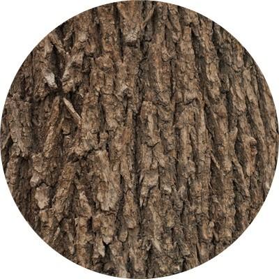 榆树皮提取物价格 陕西慧科植物开发有限公司
