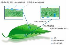 农用有机硅增效剂