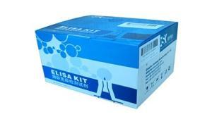 人雌二醇(E2)elisa试剂盒 公司主营ELISA试剂盒 产品图片