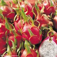 桑葚酵素 火龙果酵素  产品图片