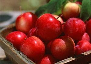 供应天然苹果提取物—根皮甙/根皮苷 含量95%巨奖联盟游戏图片