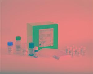 人转谷氨酰胺酶2C多肽(TGM2)ELISA试剂盒产品图片