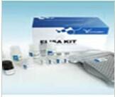 大鼠白介素1α(IL-1α)检测试剂盒 产品图片