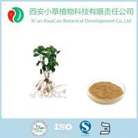 自产自销优质天然乌药叶提取物
