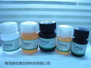 荧光抗体稀释液|产品图片