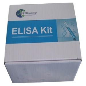 高香草酸(HVA)检测试剂盒 产品图片