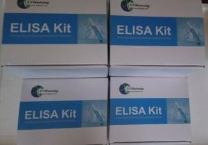 鸡白介素2(IL2)检测试剂盒 产品图片