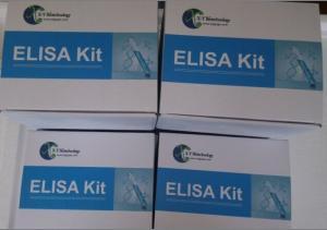 肌肽(CAR)检测试剂盒 产品图片