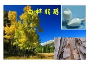 桦树皮提取物 白桦脂酸Betulinic acid 60%
