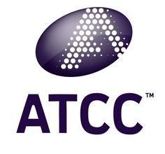白色念珠菌ATCC 10231