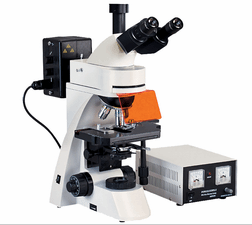 正置荧光显微镜 BM2000Z荧光显微镜 国产启步荧光显微镜产品图片