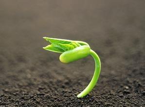 植物生长调节剂