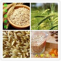 燕麦蛋白粉供应的拷贝