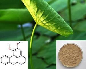 荷叶碱2%-荷叶提取物产品图片