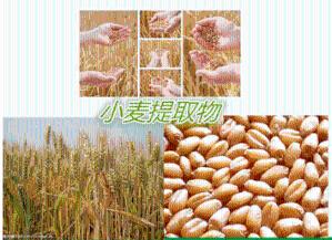 小麦多肽   小麦低聚肽  包邮