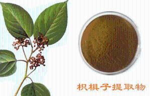 枳椇子黄酮10%-50% 拐枣提取物