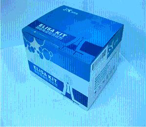 大鼠转化生长因子β1(TGFβ1)ELISA试剂盒