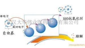 SOD 超氧化物歧化酶 植物来源