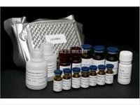 小鼠白三烯B4(LTB4)ELISA试剂盒价格