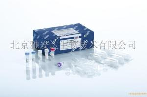 QIAamp DNA Mini Kit (50)qiagen51306现货