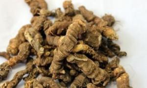 黃連提取物|黃連干燥粉|黃連生粉|供應黃連提取物|銷售黃連提取物