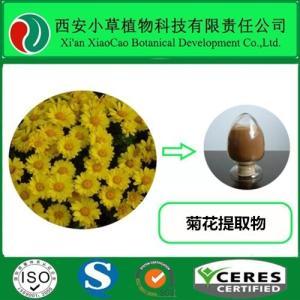 现货低价直销菊花提取物Chrysanthemum Extract10:1