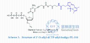 3′-O-allyl-dCTP-allyl-bodipy-FL-510产品图片