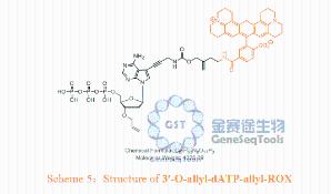3′-O-allyl-dATP-allyl-ROX产品图片
