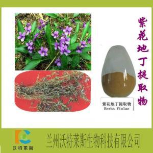 紫花地丁提取物 厂家现货包邮