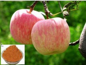 苹果提取液    青苹果粉 包邮