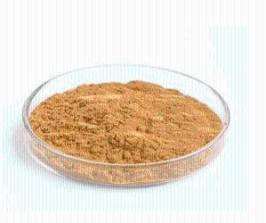 冬菇提取物10:1   冬菇粉  包邮