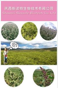 地瓜叶喷雾干燥粉 产品图片