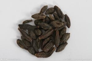 橄榄果提取物 10:1  青果速溶粉  现货直销