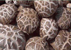 香菇粉  香菇原粉  速溶  兰州植物提取物 包邮