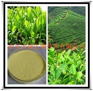 绿茶提取物 茶多酚