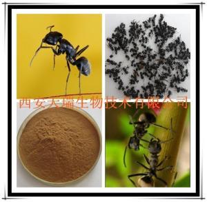 黑蚂蚁提取物