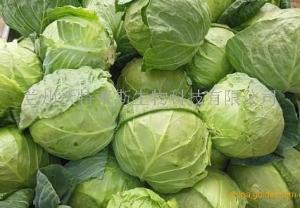 卷心菜提取物  卷心菜粉   速溶  现货供应产品图片