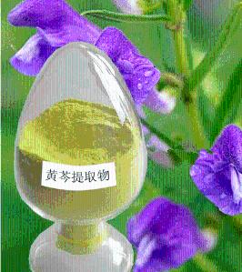 黄芩苷提取物