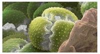 柱式昆虫RNAout 产品图片