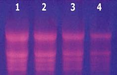柱式血液RNAout 产品图片