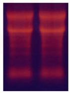 绿如蓝核酸染料70303 产品图片