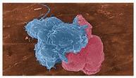 即用型荧光定量PCR试剂盒90408(媲美全式金) 产品图片