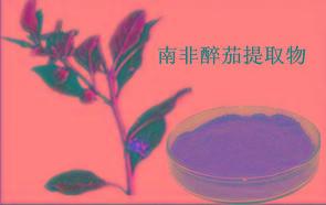 醉茄浸膏粉    大量库存  兰州植物提取物 包邮