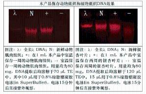 非冻型组织DNA保存液(250 mL) 产品图片