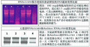 非冻型组织RNA保存液(250 mL) 产品图片
