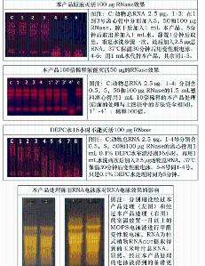 固相RNase清除剂(外源RNase清除剂)250mL 产品图片
