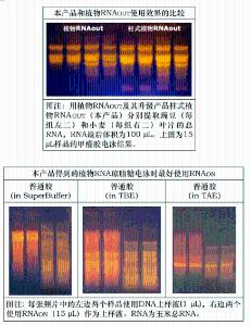 柱式植物RNAout(多糖多酚效果更好) 产品图片
