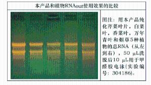 柱式植物RNAout2.0 (71203升级版) 产品图片